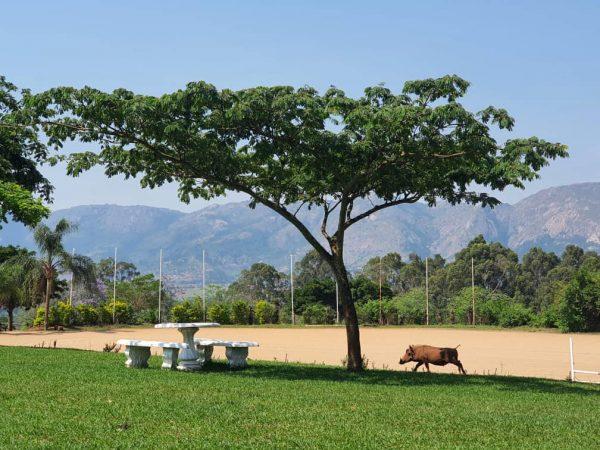 picnic venue swaziland